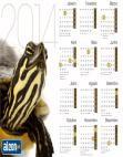 Calendário 2014 Tartaruga