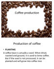 PROJECT ON COFFEE PRODUCTION AND TYPES OF COFFEE